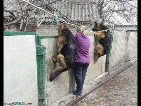 【犬猫動画】「絶対笑う」最高におもしろ犬,猫,動物のハプニング, 失敗画像集 #409  - 長さ: 11:01。