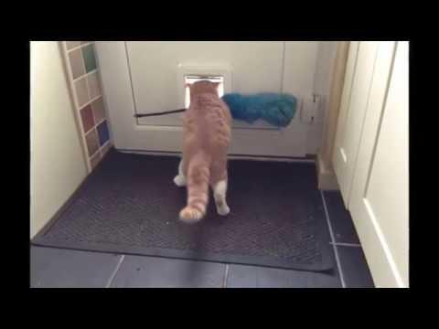 【犬猫動画】猫ちゃんの面白動画wなんでこうなったw  - 長さ: 2:28。