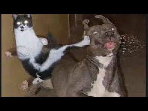 【犬猫動画】「面白い猫と犬」笑わないようにしようとしてください - かわいい猫犬の動画 ベスト 2018 コレクション #47  - 長さ: 10:27。