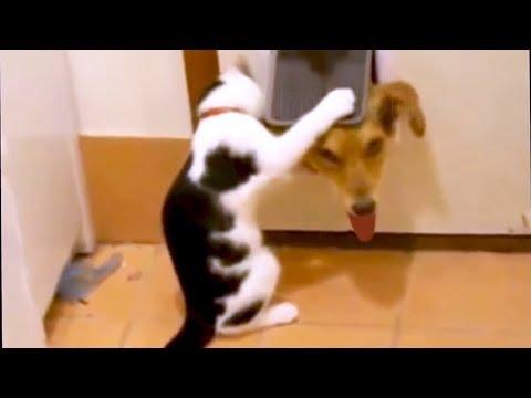 【犬猫動画】「絶対笑う」最高におもしろ犬,猫,動物のハプニング, 失敗画像集 2017 #143  - 長さ: 13:15。