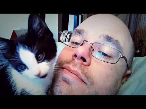 【犬猫動画】主にメイシーとルビー。 そして少しマックス。爆笑猫と爆笑犬の動画集 怒っている人でも思わず微笑む  - 長さ: 1:01。
