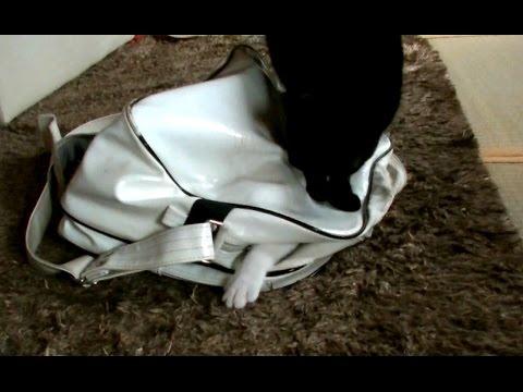 【犬猫動画】バッグがあれば猫は幸せ?(笑)  - 長さ: 1:02。