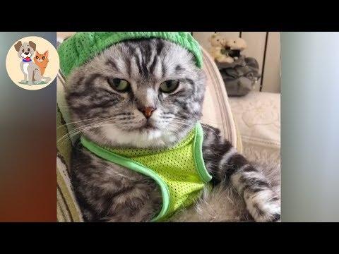 【犬猫動画】おかしい猫 - かわいい猫 - おもしろ猫動画 HD | 笑いが止まらない #8 | Kute Pets TV  - 長さ: 10:32。