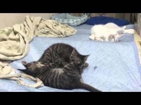 【犬猫動画】ウチの猫の寝相が悉くおかしな件2016年春  - 長さ: 17:16。