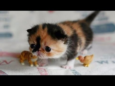 【犬猫動画】おかしい猫 - かわいい猫 - おもしろ猫動画 HD #138  - 長さ: 6:32。