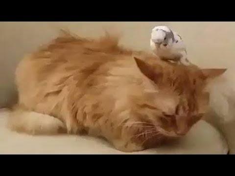 【犬猫動画】「猫かわいい」 猫おもしろ - 最も面白い猫の映画2017 #65  - 長さ: 10:06。