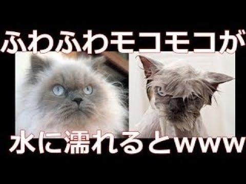 【犬猫動画】濡れておもしろいことになった動物達 【犬編】  - 長さ: 11:43。