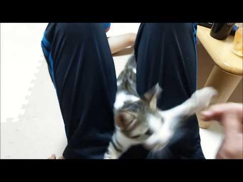 【犬猫動画】猫釣り遊びです。  - 長さ: 0:43。