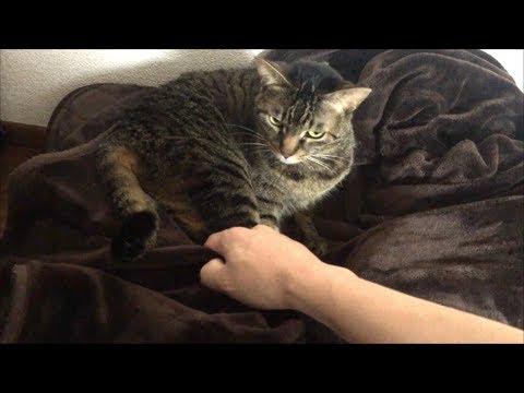 【犬猫動画】凶暴猫から毛布を取り返そうとしたらブチギレられた...  - 長さ: 2:10。