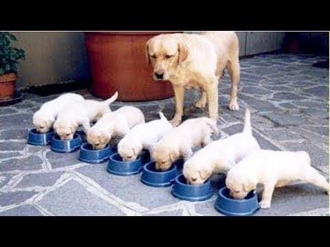 【犬猫動画】「絶対に笑う」あり得ないことをする犬★おもしろい犬のハプニング, 失敗画像集 #7  - 長さ: 12:22。