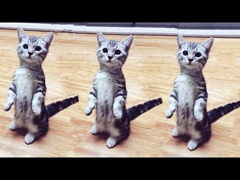 【犬猫動画】おかしい猫 - かわいい猫 - おもしろ猫動画 HD #100  - 長さ: 5:32。