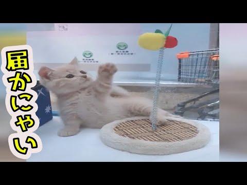 【犬猫動画】見てるだけで可愛い♪癒される猫動画特集#8  - 長さ: 10:22。