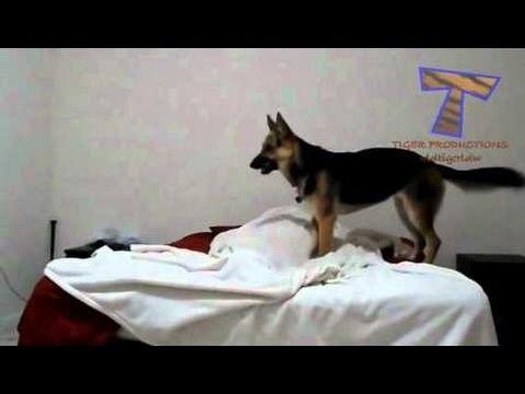 【犬猫動画】かわいい犬が目を覚ます 面白い犬の編集2015 ...  - 長さ: 5:23。