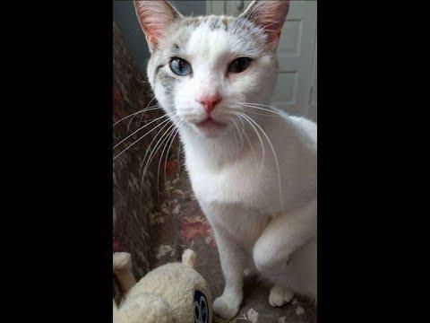 【犬猫動画】ご飯をもらい、お礼を持って来た野良猫。そんな猫を家に迎え入れると…!  - 長さ: 2:59。
