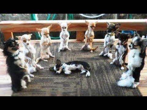 【犬猫動画】「面白い動物」あり得ないことをする犬, 猫・おもしろ犬, 猫のハプニング, 失敗集 #216  - 長さ: 13:24。