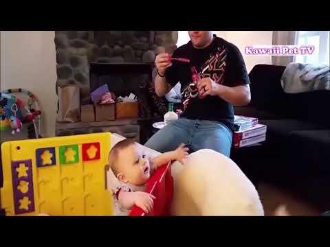【犬猫動画】「おもしろ犬と赤ちゃん」赤ちゃんが大好き犬たち 見てて楽しい ● 赤ちゃんの笑い方を聞くだけで楽な気分になる 2017  - 長さ: 11:23。