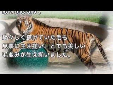 【犬猫動画】かわいいハスキー犬,マラミュート犬の最高に可愛い・おもしろハプニング動画集 #17  - 長さ: 14:27。
