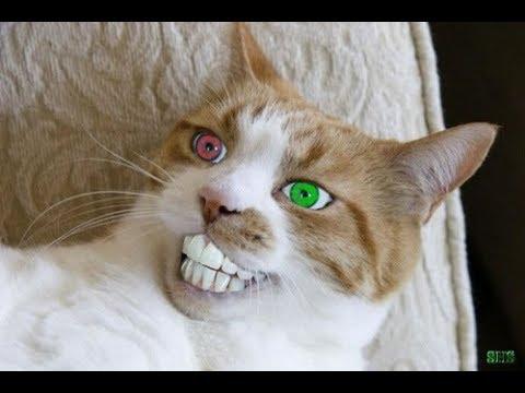 【犬猫動画】「絶対笑う」最高におもしろ犬,猫,動物のハプニング, 失敗画像集  - 長さ: 0:57。