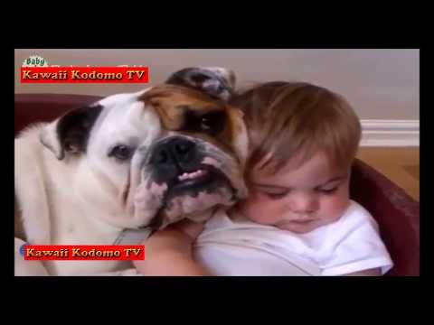 【犬猫動画】最高におもしろピットブル犬と赤ちゃんのハプニング集。めっちゃかわいい  - 長さ: 10:17。