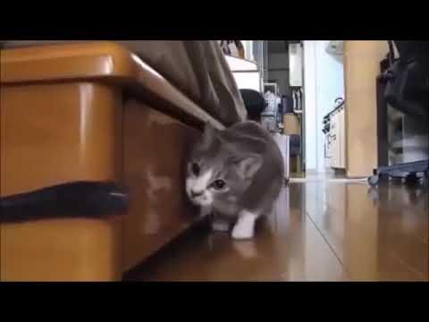 【犬猫動画】だるまさんが転んだ?徐々に近づく猫  - 長さ: 0:18。