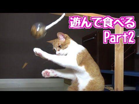 【犬猫動画】茶トラ 茶白猫と黒猫  吊り下げた餌入りのガチャのカプセルから    猫パンチで餌を出す!    - 長さ: 2:47。