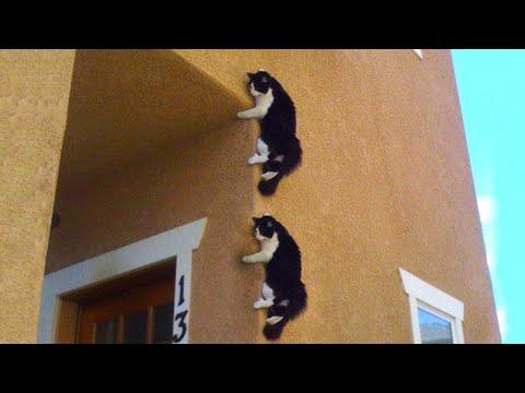 【犬猫動画】おかしい猫 - かわいい猫 - おもしろ猫動画 HD #152  - 長さ: 6:08。