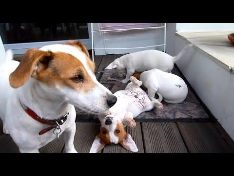 【犬猫動画】 もふもふ 可愛い犬 猫  - 長さ: 13:20。