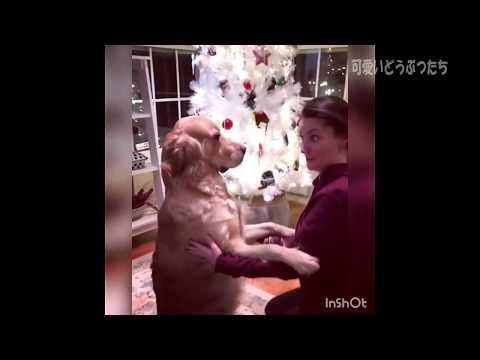 【犬猫動画】可愛すぎる動物たち!おもしろ!ハプニング!犬 猫 動物 爆笑  - 長さ: 6:08。