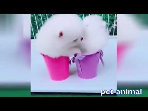【犬猫動画】かわいい動物、犬、猫たち おもしろペット動画#46  - 長さ: 4:26。
