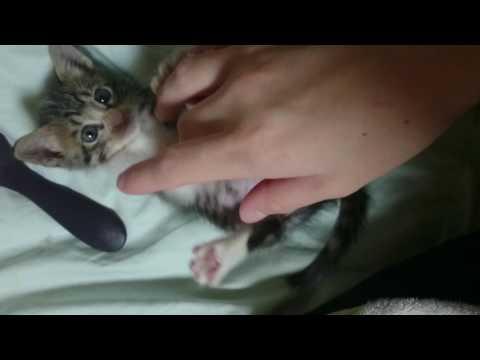 【犬猫動画】可愛い猫 おもしろい猫 磧本家の愉快な仲間たち ふーたんNo.4  - 長さ: 0:24。