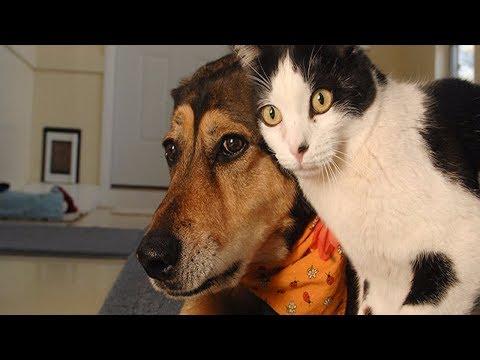 【犬猫動画】「絶対笑う」最高におもしろ犬,猫,動物のハプニング, 失敗画像集 2017 #193  - 長さ: 10:22。