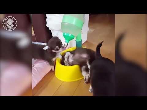 【犬猫動画】犬と猫の面白動画集(Animals Doing Things)  - 長さ: 11:22。