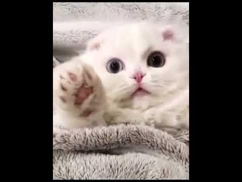 【犬猫動画】「絶対笑う」最高におもしろ犬,猫,動物のハプニング, 失敗画像集 #350 2  - 長さ: 11:31。