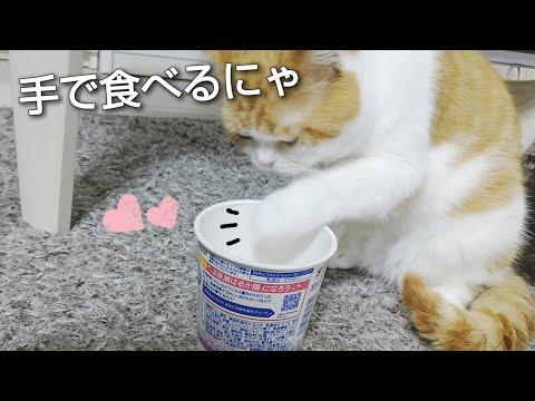 【犬猫動画】どうしても食べたいにゃ おもしろ猫動画  - 長さ: 1:14。