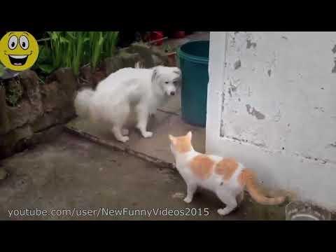 【犬猫動画】笑える - おもしろ - 10から2016  - 猫おかしい動物のコンパイルを怖がっ最高の面白い動画犬  - 長さ: 4:10。