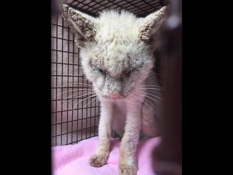 【犬猫動画】目が見えない猫を保護。しばらくすると驚きの結果が!surprised to protect the cat♡  - 長さ: 3:00。