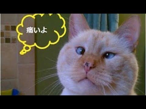 【犬猫動画】「絶対笑う」最高におもしろ犬,猫,動物のハプニング, 失敗画像集 #1  - 長さ: 11:36。