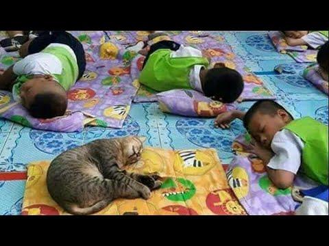 【犬猫動画】おかしい猫 - かわいい猫 - おもしろ猫動画 HD #70  - 長さ: 10:01。