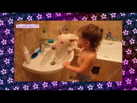 【犬猫動画】犬 かわいい 「爆笑犬」最高におもしろ犬のハプニング、失敗、かわいい動画集 可愛いアニマルチャンネル  - 長さ: 10:46。