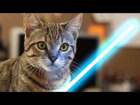 【犬猫動画】トップ10おかしい猫と犬おもしろビデオ2017  - 猫と犬の編集null  - 長さ: 10:23。