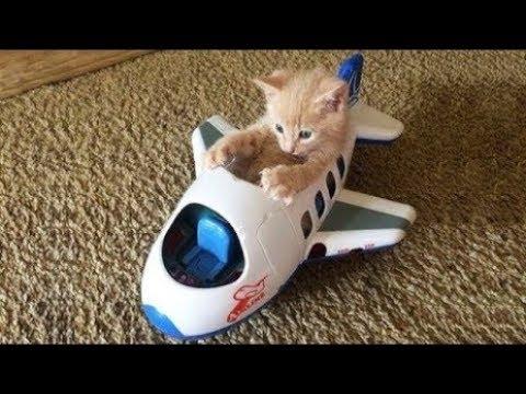【犬猫動画】おかしい猫 - かわいい猫 - おもしろ猫動画 HD #116  - 長さ: 9:51。