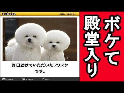 【犬猫動画】ボケて殿堂入り 最新可愛い犬爆笑面白画像集まとめ  - 長さ: 5:32。