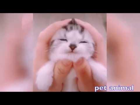 【犬猫動画】かわいい動物、犬、猫たち おもしろペット動画#45  - 長さ: 4:26。