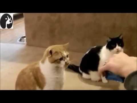 【犬猫動画】『おもしろ可愛い猫達がハイタッチするところを集めた動画集』  - 長さ: 2:39。