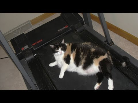 【犬猫動画】スリムに運動をしている超かわいい猫 ||  面白い赤ちゃんとペット  - 長さ: 3:49。