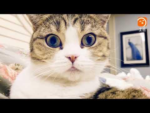 【犬猫動画】「絶対笑う」最高におもしろ犬,猫,動物のハプニング, 失敗画像集 part  - 長さ: 6:01。
