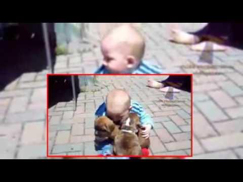 【犬猫動画】子犬から大型犬のおもしろ動画  - 長さ: 3:56。