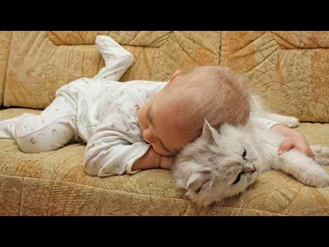 【犬猫動画】おかしい猫 - かわいい猫 - おもしろ猫動画 HD #244  - 長さ: 6:16。