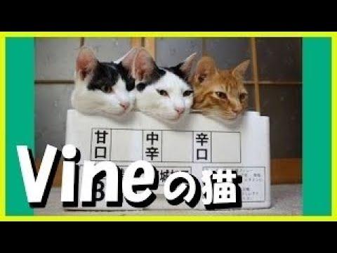 【犬猫動画】funny cats 48 おもしろ猫動画まとめ パート48  - 長さ: 14:10。