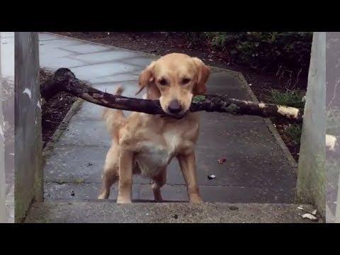 【犬猫動画】「絶対笑う」最高におもしろ犬,猫,動物のハプニング, 失敗画像集 #372  - 長さ: 10:02。